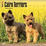 Cairn Terrier dogs Wall Calendar 2018 {jg} Best Holiday Gift Ideas - Great for mom, dad, sister, brother, grandparents, grandchildren, grandma, gay, lgbtq.