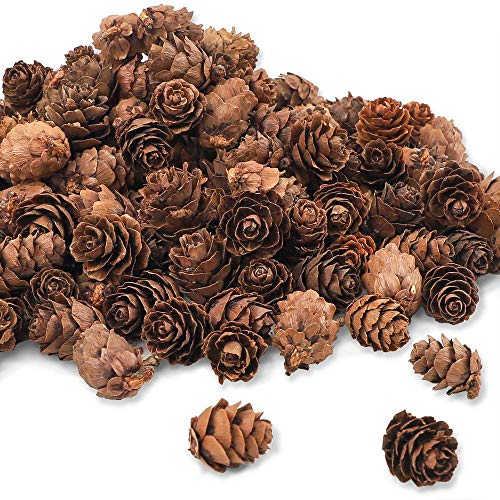 Pine Cone Craft (CEWOR 210pcs Pine Cones for Crafts 1inch Mini Natural Pinecones Fall Decorations for Home Thanksgiving Christmas)