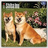 Shiba Inu 2017 Square (Multilingual Edition)