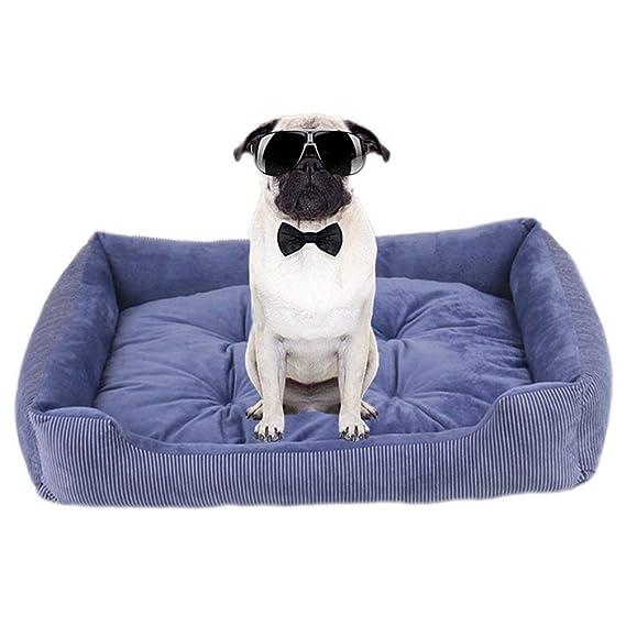 zhenghewyh Cama Perros Gato Cesta Mascotas Pequeña Medio Grande Lavable Cojín Reversible (XXL, Azul): Amazon.es: Productos para mascotas