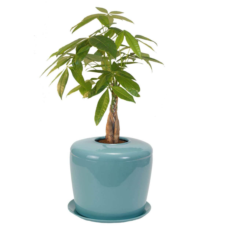 Urna de cremación biodegradable OneWorld Memorials de cerámica ...