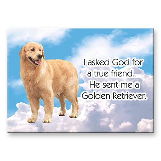 Golden Retriever True Friend imán para nevera 2 sin: Amazon.es: Hogar