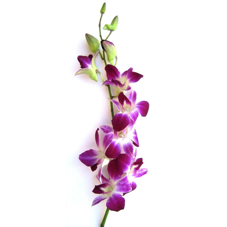 Fresh Flowers - 20 Purple Dendrobium Orchids