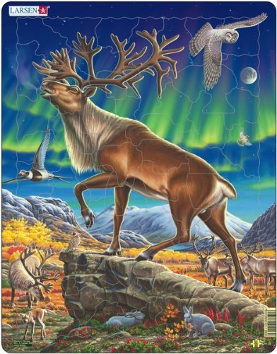 Nordic Reindeer - 7