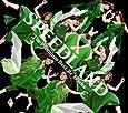 SPEEDLAND -The Premium Best Re Tracks-(DVD付)