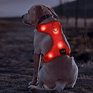 BSEEN LED Dog Harness LED Dog Vest USB Rechargeable Soft Mesh Vest with Adjustable Belt Padded Lightweight for Large Medium Small Dogs