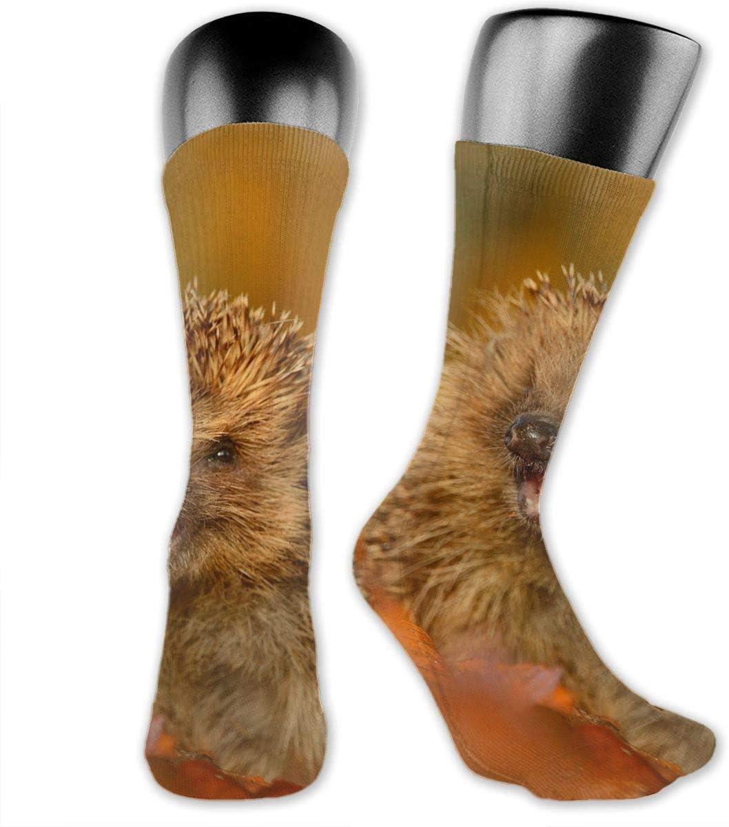 OLGCZM Pomeranian Dog Pattern Men Womens Thin High Ankle Casual Socks Fit Outdoor Hiking Trail