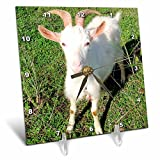 3dRose dc_21325_1 Farm Animals Goat Desk Clock, 6 by 6-Inch