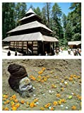 DollsofIndia Hadimba Temple, Himachal Pradesh & Portrait of Sadhu - 2 Postcards - 4.75 x 6.75 and 4.25 x 6.25 inches Respectively - Unframed