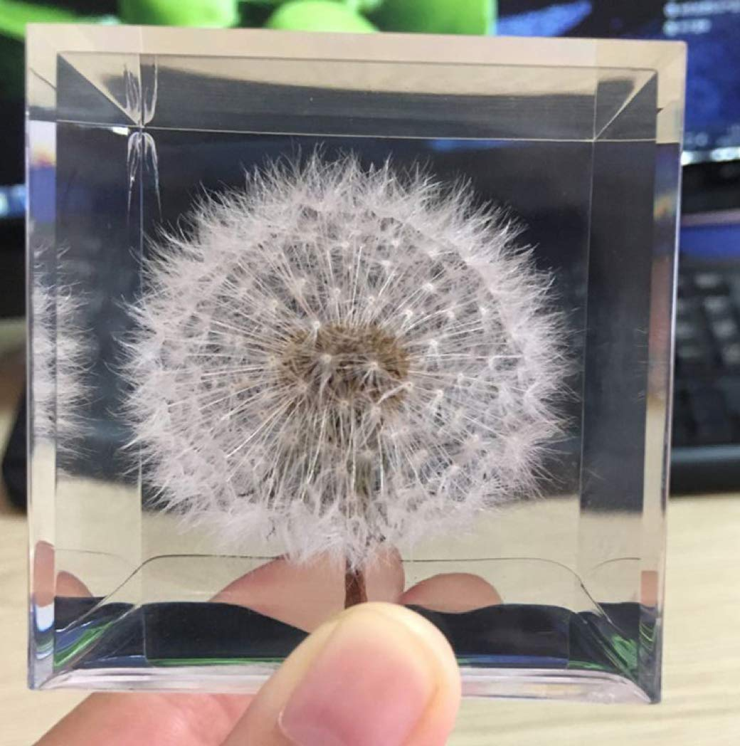 A Real Dandelion Puff! 2.25 x 2.25 x 2.25 Cube Dandelion Paperweight Cube Cube and Cuboid