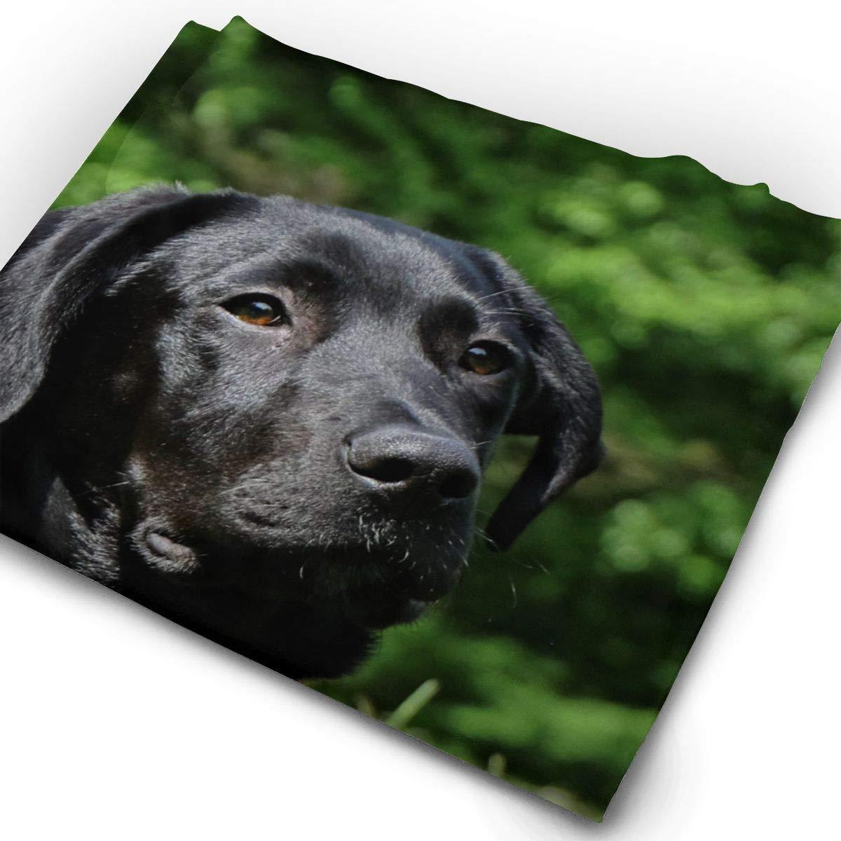 Black Labrador Dog Unisex Fashion Quick-Drying Microfiber Headdress Outdoor Magic Scarf Neck Neck Scarf Hooded Scarf Super Soft Handle