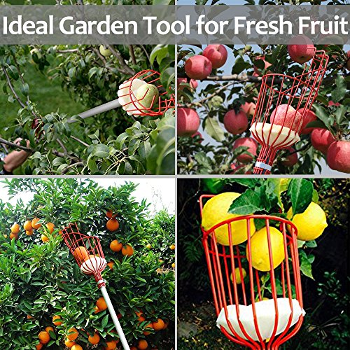 EnergeticSky 13-Foot Fruit Picker with Light-Weight Aluminum Telescoping Pole and Bruise Free Basket for Apple,Pear,Peach,Orange and More Peach Harvesting,Handy 5 Section Extension Pole by EnergeticSky (Image #6)