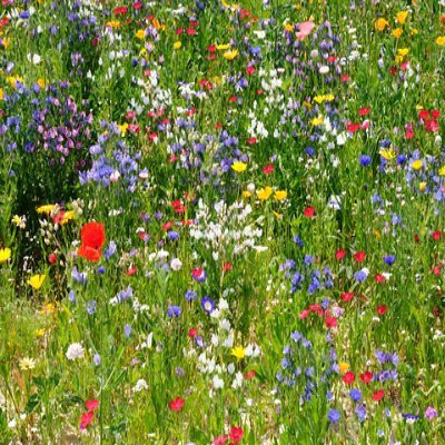 Favorite Meadow Wildflower Seed Mix - 1 Lb