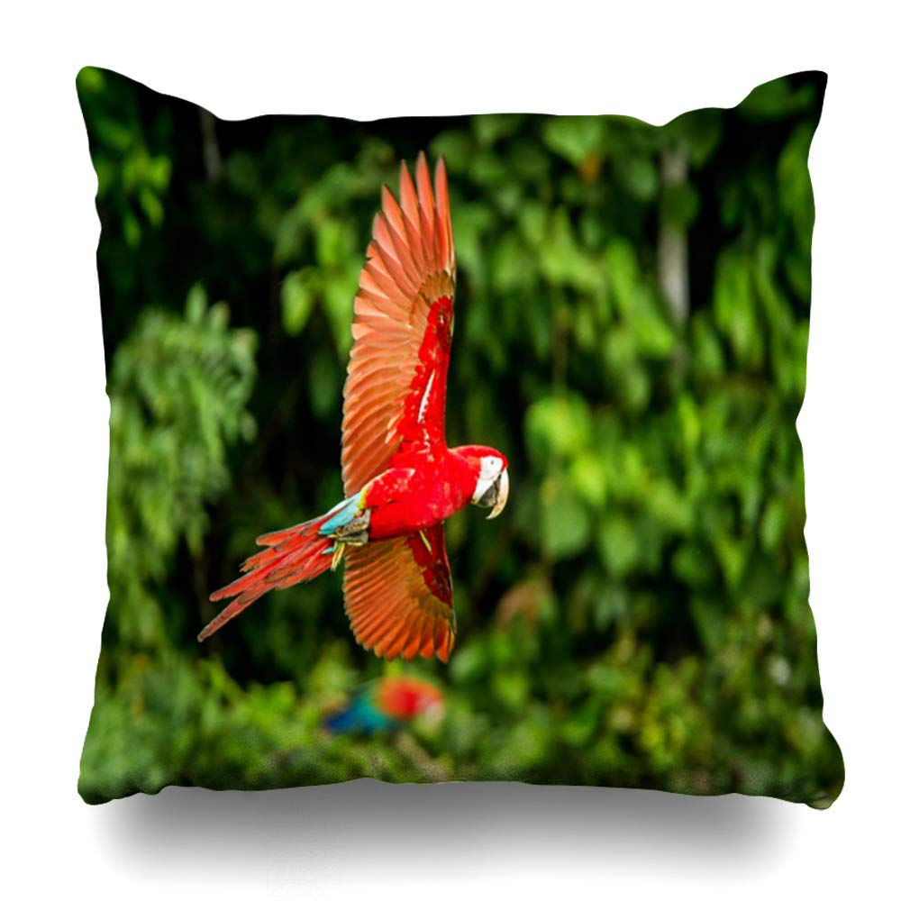 Ahawoso Throw Pillow Cover Pillowcase Square 20x20 Vegetation Red Clay Parrot Manu Flight Macaw Flying in Fly Green Animals Amazonian Wildlife Nature Decorative Cushion Case Home Decor Pillowslip