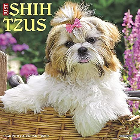 Just Shih Tzus 2019 Wall Calendar (Dog Breed Calendar) Willow Creek Press 1549202367 Calendars NON-CLASSIFIABLE
