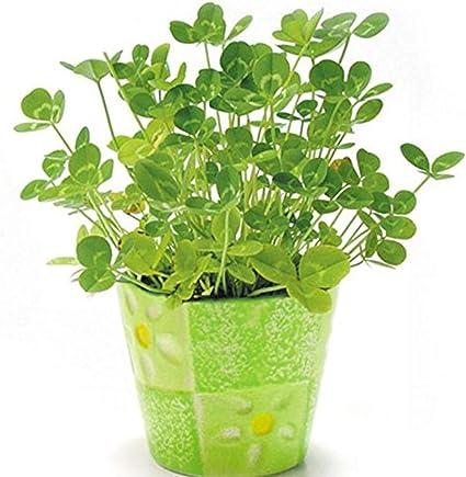 3 X Paquets De Graines 25 x 10 L Noir Plastique Plante Pots