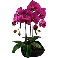 Red Vanilla OF064-100 Phalaenopsis White Orchid Centerpiece/Black Base