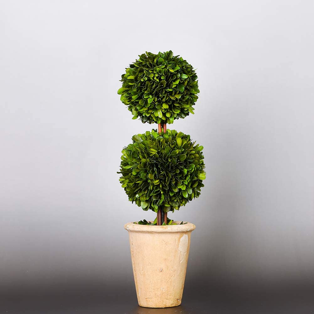 20 inch Tall Indoor use only Preserved Boxwood Two Sphere Topiary/Home Plant Potted in a Mossy Stone Planter