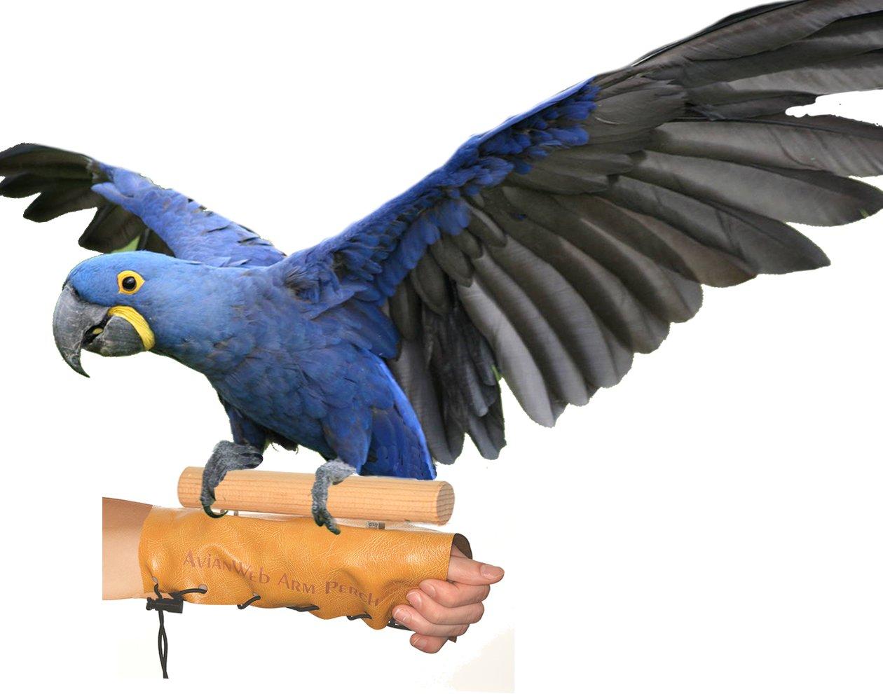 Avianweb Arm & Hand Perch (Jumbo (2'' Dowel)) by Avianweb