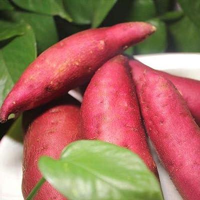 Werall Garden Seeds - 20pcs/50pcs Sweet Potato Seeds, Organic Seed Potato Specialty Sweet Potato Vegetable Fruit for Salad : Garden & Outdoor