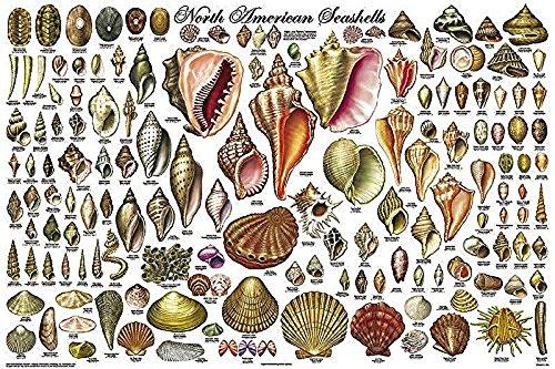 sea chart poster - 1