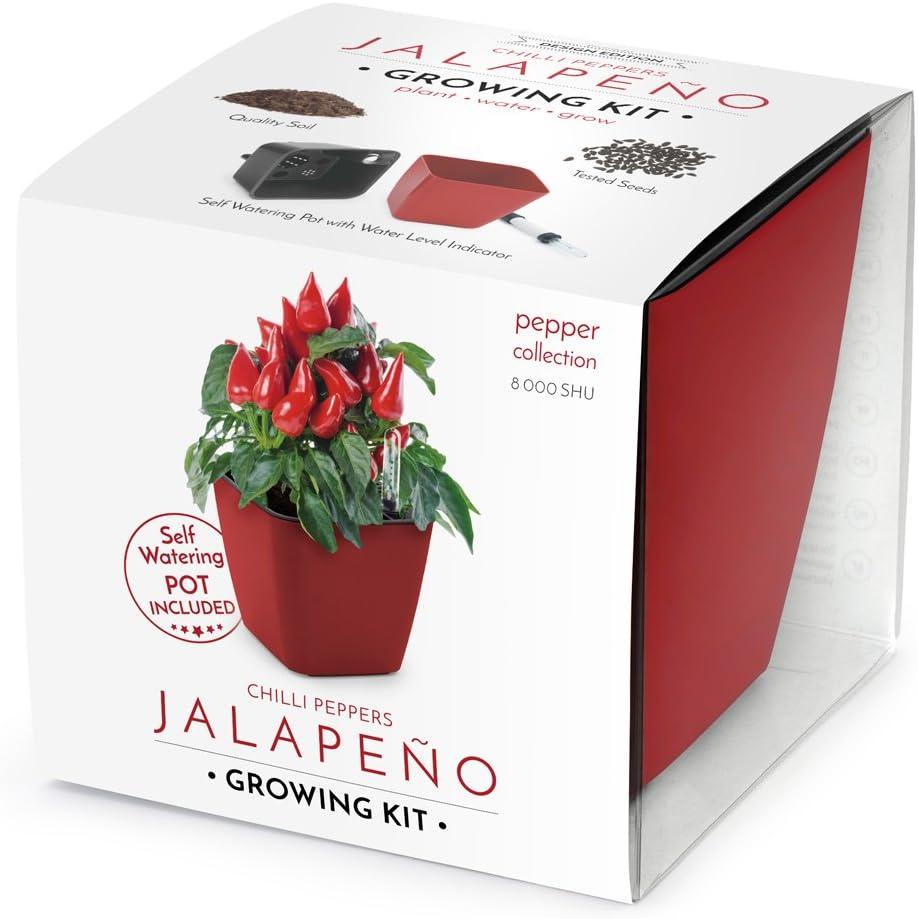 Domestico Kit de Jalapeños para cultivar, Chilli peppers growing kit (Rojo), All-In-One set – hidrojardinera 13x13 cm, semillas testadas, sustrato fresco con nutrientes