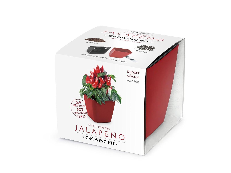 Domestico Kit de Jalapeños para cultivar, Chilli peppers growing ...