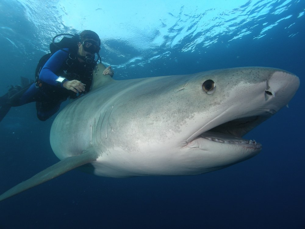 Shark Tracker: Confessions of an Underwater Cameraman: Richard