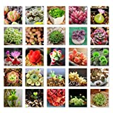Adarl 500pc/Package Multi Succulent Plants Seeds Ornamental Plants Seeds Courtyard Garden With Flower Seeds Professional Pack