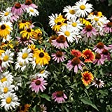 Outsidepride Perennial Wildflower Seed Mix - 5 LB