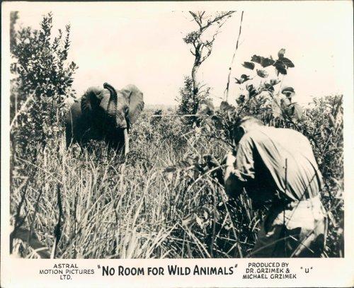 NO ROOM FOR WILD ANIMALS BAMBUTI ELEPHANT NATURE DOCUMENTARY LOBBY CARD from Silverscreen