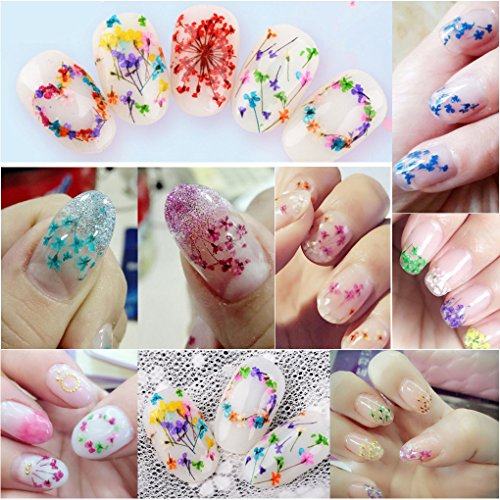 24pcs 12 Colors Natural Real Dried Flowers for Manicure Nail Art Decoration 4 Flower Nail Art Stickers Mini Tweezers Manicure Set DIY 4 Sheet Nail Decal Stickers (Luck011B) by LuckForever