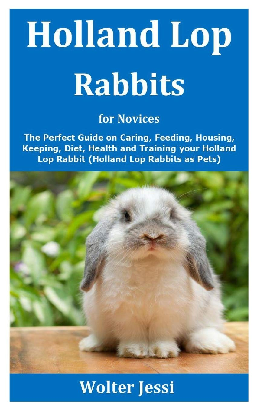 Holland Lop Rabbits For Novices The Perfect Guide On Caring Feeding Housing Keeping Diet Health And Training Your Holland Lop Rabbit Holland Lop Rabbits As Pets Jessi Wolter 9798673039793 Amazon Com Books