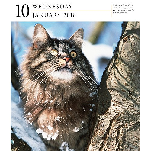 Cat 2018 Page-A-Day Gallery Calendar Photo #3