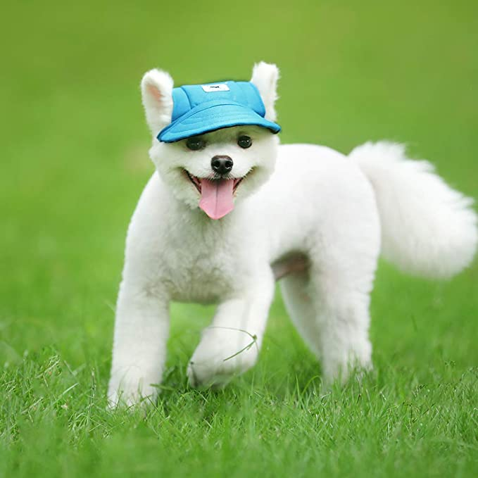 Amazon.com: Gorra de béisbol para perros, de Happy Hours ...