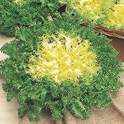 Endive riccia Cuore di oro Seeds (avg 50-100) Seeds 4 : Garden & Outdoor