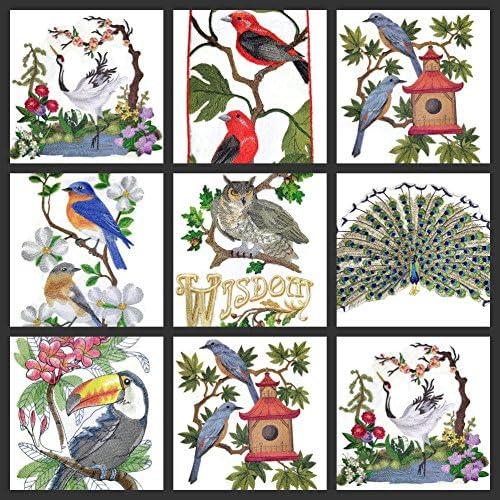 Toppa ricamata da stirare//cucire con scritta in lingua ingleseAmazing Birds Kingdom prodotta negli Stati Uniti 14,2 x 18,4 cm