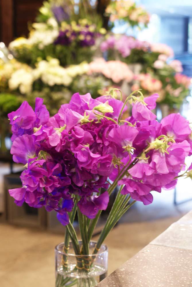 スイートピー(紫)