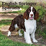img - for English Springer Spaniels 2020 12 x 12 Inch Square Wall Calendar, Animals Dog Breeds book / textbook / text book