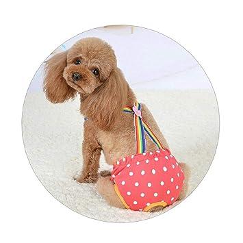 AMOYER Lindo Dots para Perros Fisiológicos Pantalones Cortos ...