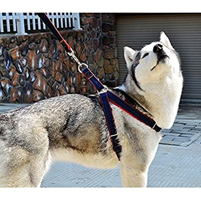 HKYH No-Pull Dog Leash Harness Adjustable and Heavy Duty Denim Dog Training Walking Leash Collar for Large/Medium/Small Dog from HKYH