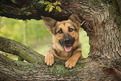 Art Print on Canvas Wall Decor Poster (german shepherd dog wood tree) Size:28x42inch