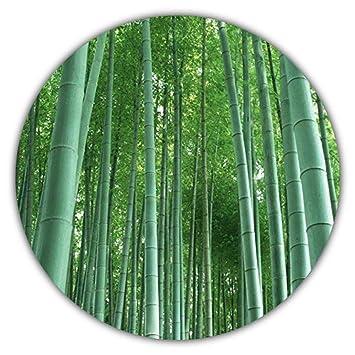 Riesenbambus Moso Bambus Ca 50 Samen Schnelles Wachstum