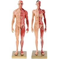 B Blesiya 30cm Figura Masculina Femenina Referencia Anatómica para Artistas