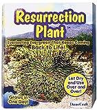 Dunecraft Resurrection Plant Science Kit