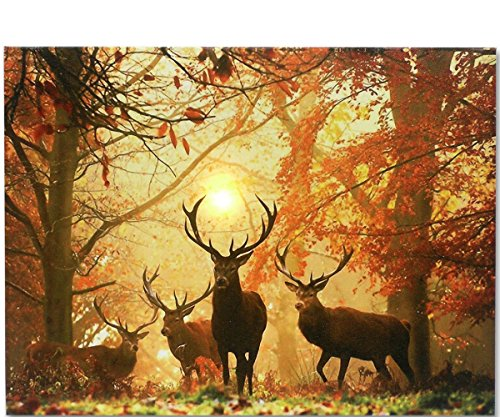 Deer Picture - LED Wrapped Canvas Print 16x12 Inch