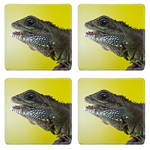 Liili Square Coasters Non-Slip Natural Rubber Desk Pads Close up portrait of beautiful water dragon lizard reptile eating an insect Photo 19504434