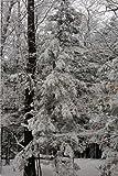 Pretty Winter Snowstorm Photography Journal: (Notebook, Diary, Blank Book) (Seasonal Winter Photo Journals Notebooks Diaries)