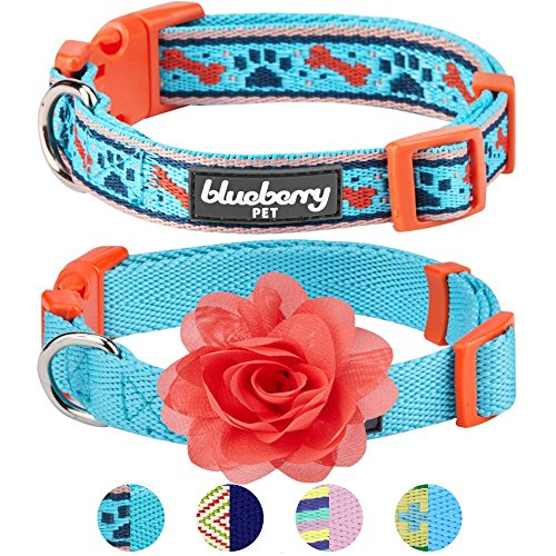 Blueberry Pet Pack of 2 Multiple Designs Mix