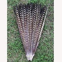 ZZM 10pcs 12–35,6cm faisán plumas DIY decoración accesorios
